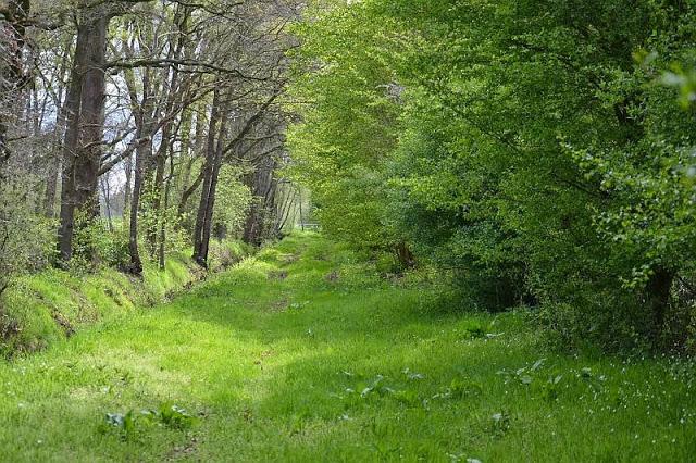am Waldrand beim Mackenstedter Graben