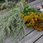 Wermut und Rainfarn