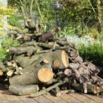 Totholz vom Essigbaum