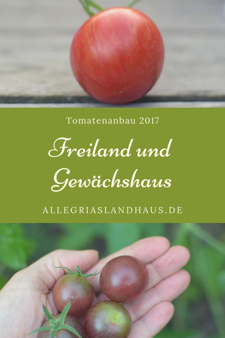 Tomatenanbau 2017