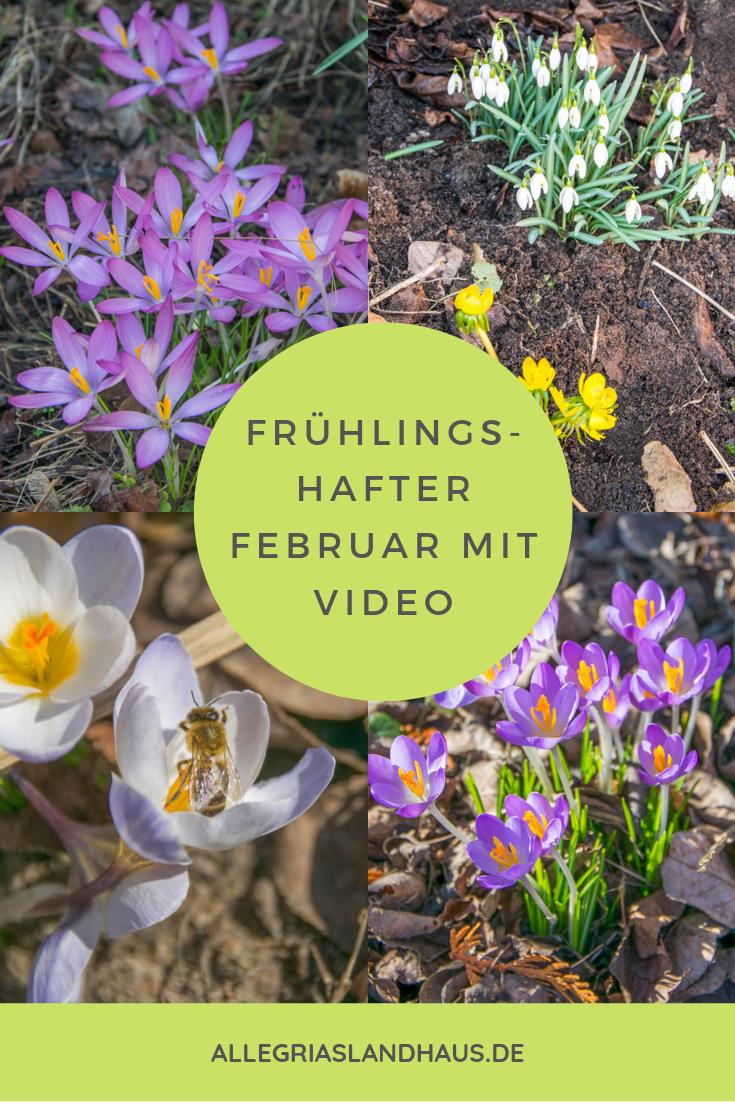 Februar im Landhausgarten