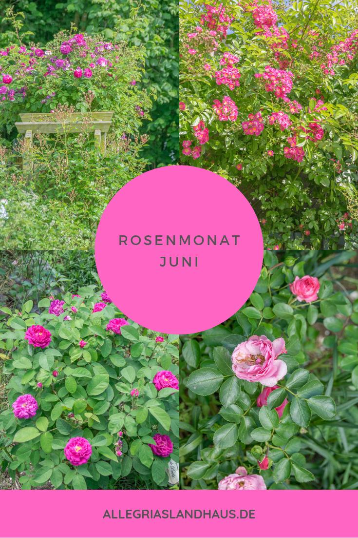Rosenmonat Pin