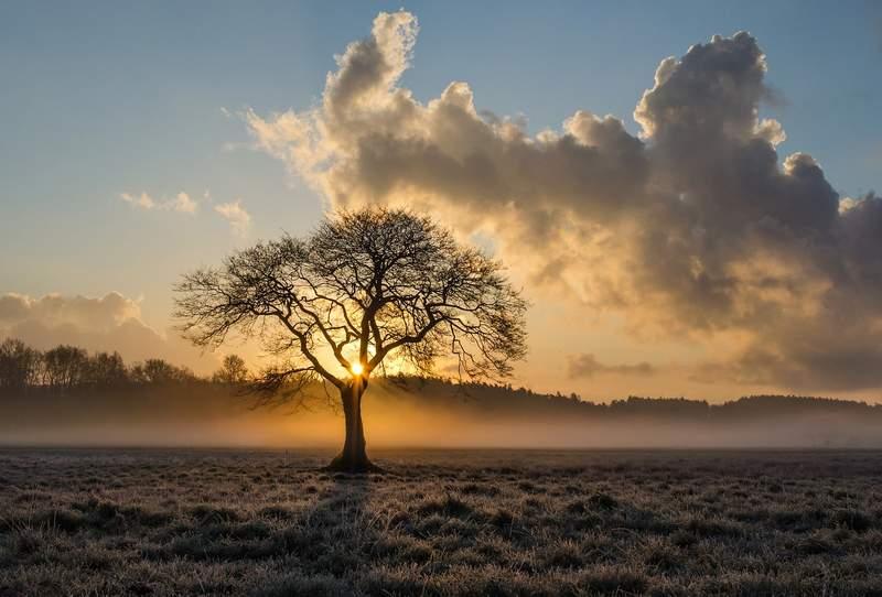 einsamer Baum in der Dämmerung