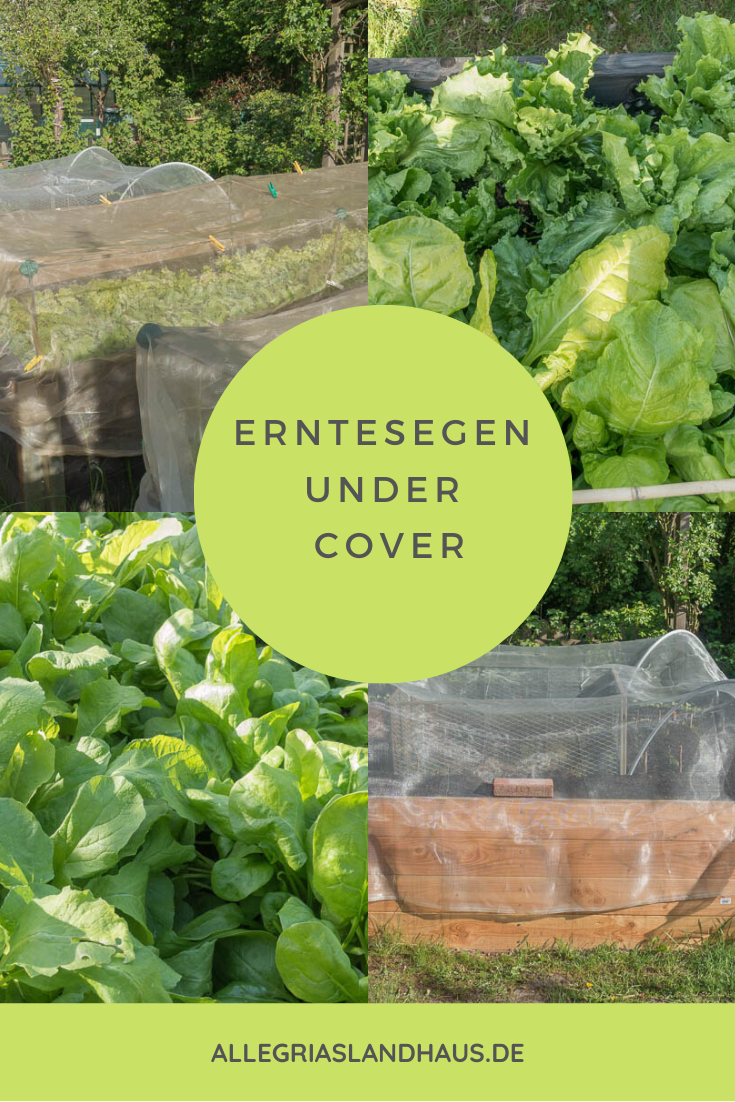 Erntesegen-under-cover