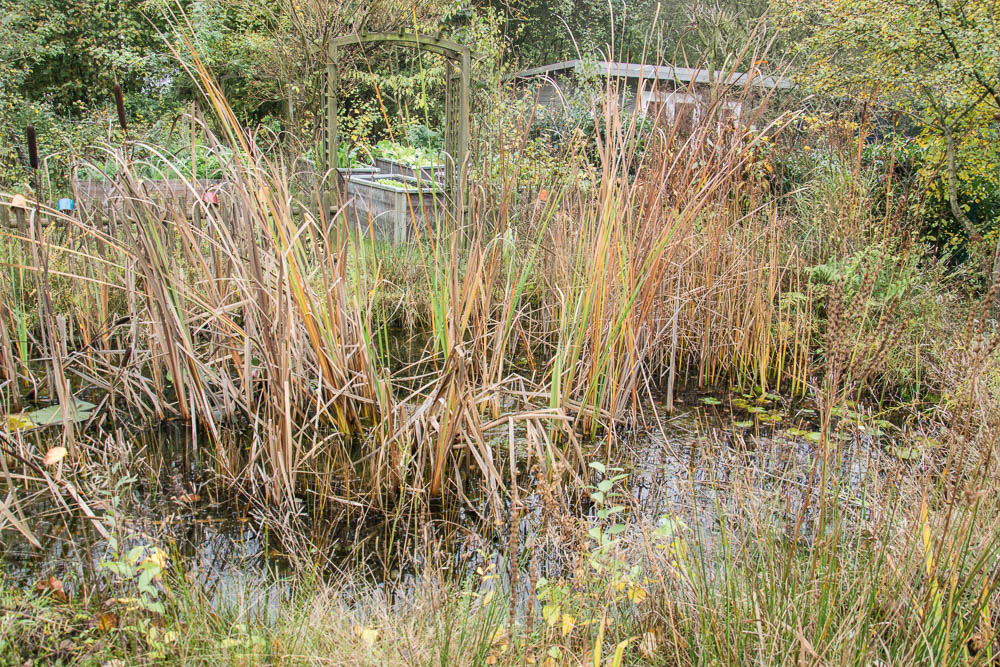 Teich im November