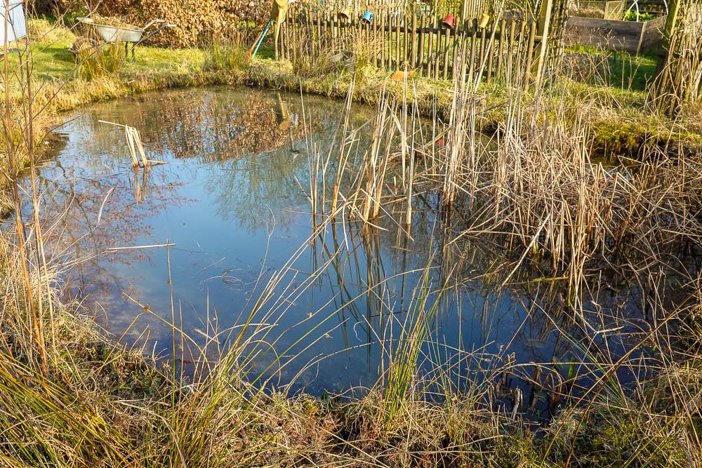 Teich nach Frühjahrsputz